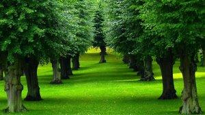 tree-garden-grass