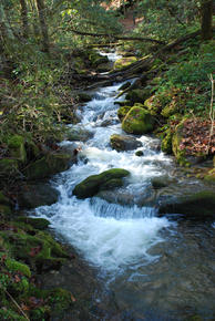 sterling-great-smoky-mountains-national-park_medium